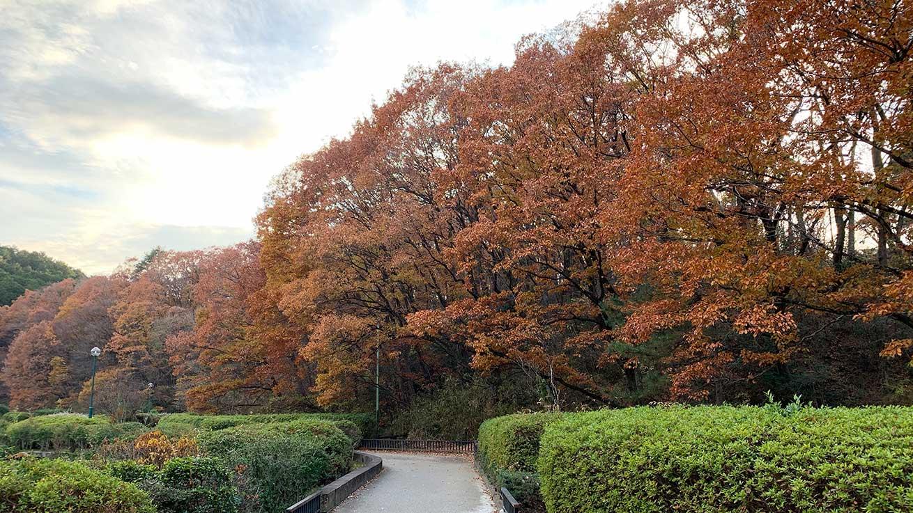 cokoguri - Dainahara Shinrin Koen - Fall Foliage