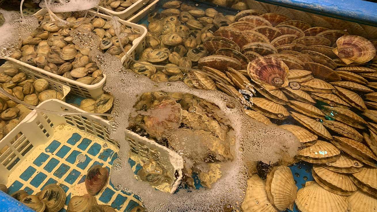 cokoguri - Seafood Izakaya Tank