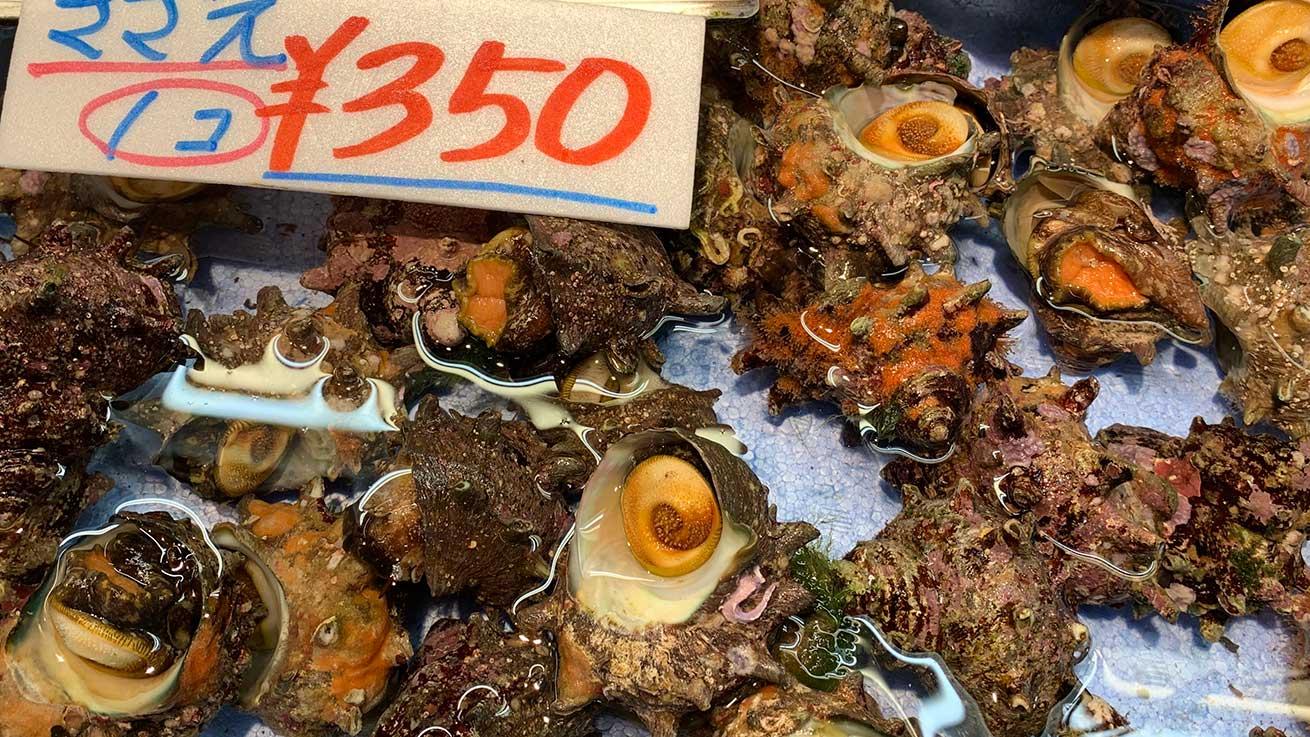 cokoguri - Shiogama Seafood Wholesale Market - Clams