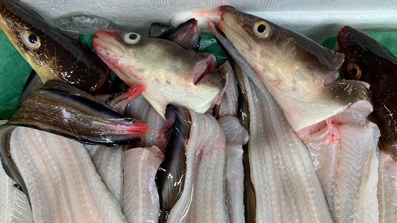 cokoguri - Shiogama Seafood Wholesale Market - Eels